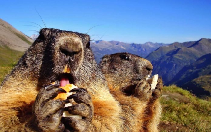What to Expect From a Virtual Groundhog's Day